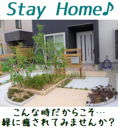 stayhome_icon
