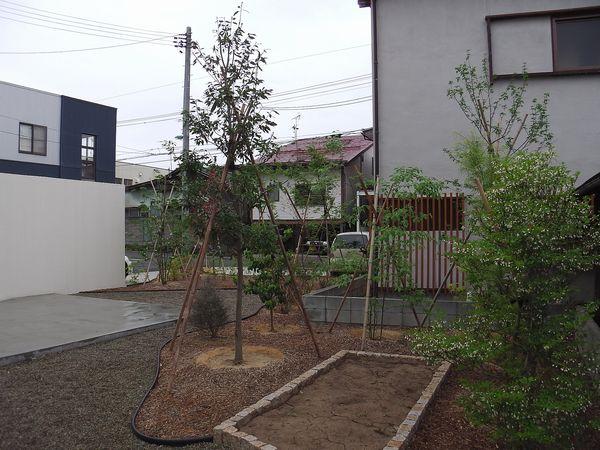 IMGA0709