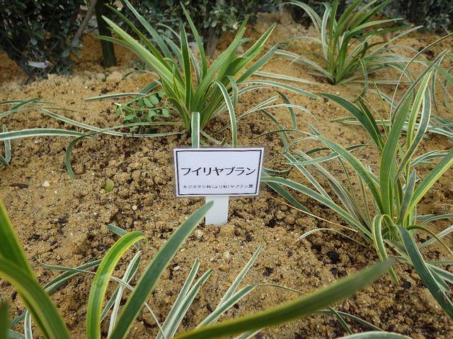 植物タグをリニューアルしました。