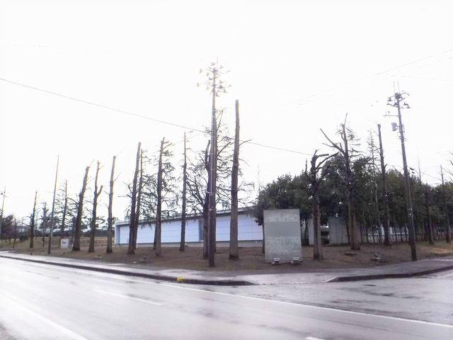 とある工場の樹木剪定を行いました。