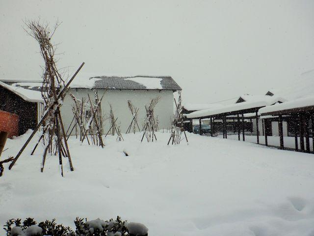 東の杜に雪囲いを施しました。